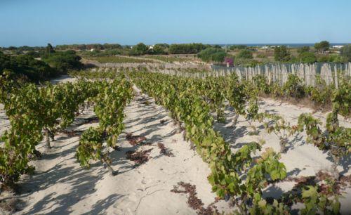 6Mura | Solo sabbia, mare e vigne centenarie