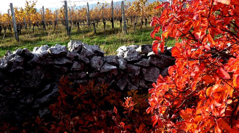 l vini del Carso hanno il sapore della felicità