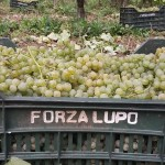"""Anteprime Fiano: """"base"""" Picariello e Tognano Rocca del Principe 2014"""