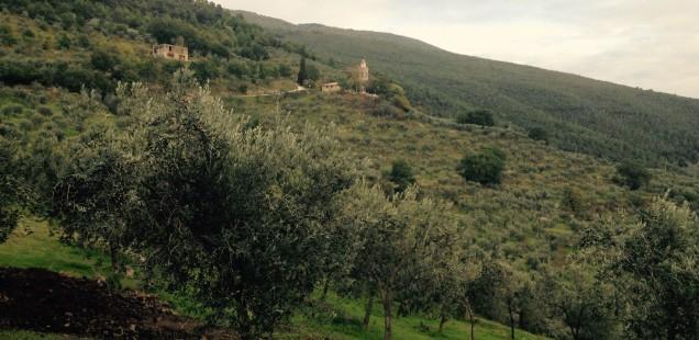 Gaudenzi | L'olio extravergine ritrovato