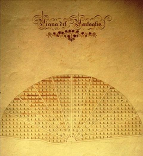 Raffigurazione della Vigna del Ventaglio - sanleucioonline.it