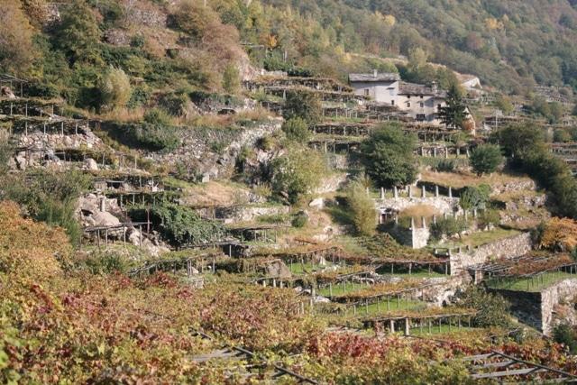 carema-terrazze