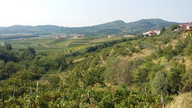 vigne-collio