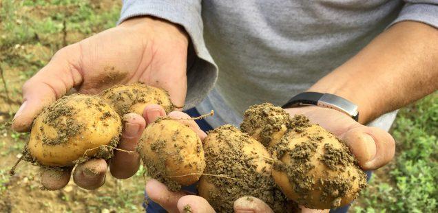 Pietralunga | Il Grand Cru della patata