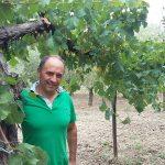 Aggiornamento Bianchi campani 2016 | Rocca del Principe e Pietracupa