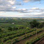 Archivio | Verticale Brunello di Montalcino Il Marroneto (Gambero Rosso Mensile)